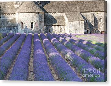 Senanque Abbey And Lavender Field - Provence France Canvas Print by Matteo Colombo