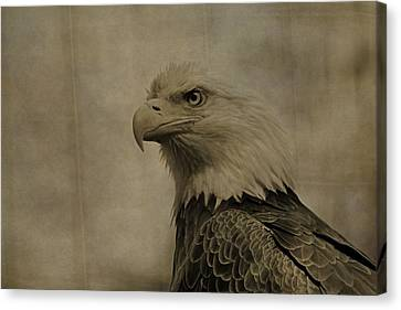 Sepia Bald Eagle Portrait Canvas Print by Dan Sproul