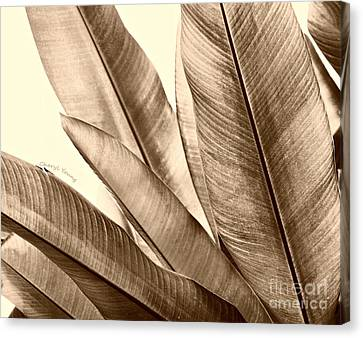 Sepia Leaves Canvas Print by Cheryl Young