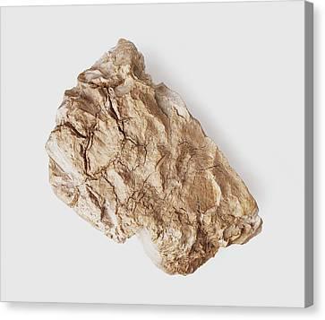 Sepiolite Clay Mineral Canvas Print by Dorling Kindersley/uig