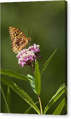 Serendipity Butterfly Canvas Print by Christina Rollo