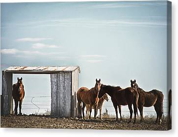 Serendipity  Canvas Print by Kimberly Danner