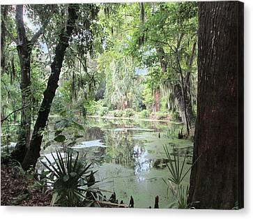 Serene Swamp Canvas Print by Silvie Kendall