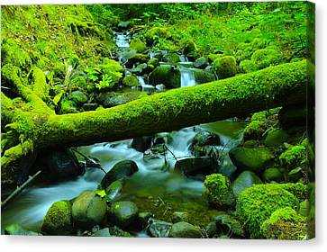 Serenity On The Rocks Canvas Print by Jeff Swan