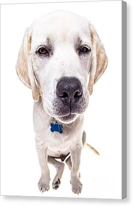 Seriously? Canvas Print by Diane Diederich