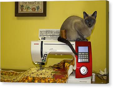 Sewing Supervisor Canvas Print by Sally Weigand