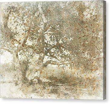 Shade Tree Canvas Print by Brett Pfister