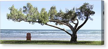 Shade Tree Panoramic Canvas Print by Mike McGlothlen
