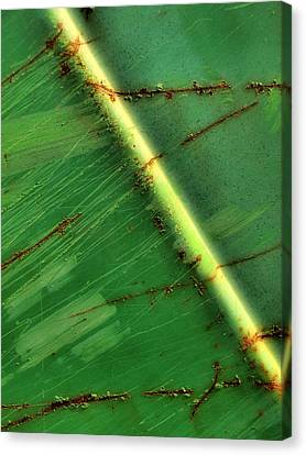Shades Of Green Canvas Print by Tom Druin