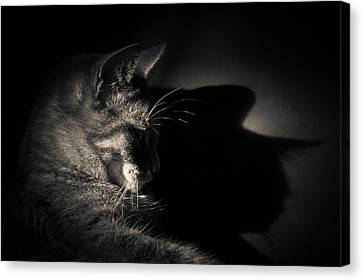 Shadow Of A Cat's Thoughts Canvas Print by Loriental Photography