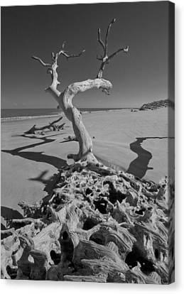 Shadows At Driftwood Beach Canvas Print by Debra and Dave Vanderlaan