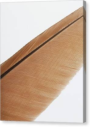 Shaft And Barbs Of Elongated Canvas Print by Dorling Kindersley/uig
