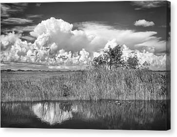 shark river slough BW Canvas Print by Rudy Umans
