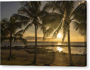 Sharks Cove Sunset 2 - Oahu Hawaii Canvas Print by Brian Harig