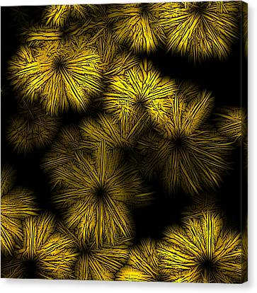 Shattered Daisy 2 Canvas Print by Patricia Keith