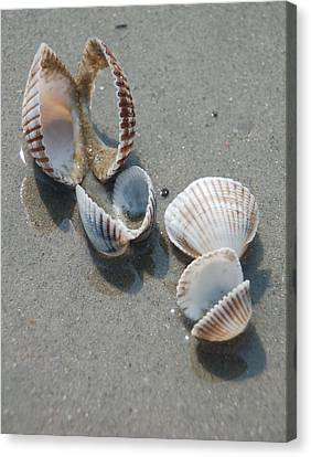 She Sells Sea Shells Canvas Print by Suzanne Gaff
