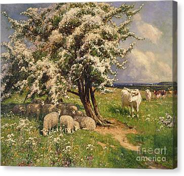 Sheep And Cattle In A Landscape Canvas Print by Arthur Walker Redgate