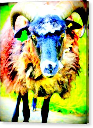 It's A Sheep Life Inside Of This Coat  Canvas Print by Hilde Widerberg