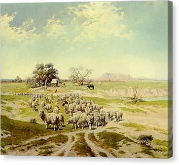 Sheepherding Montana Canvas Print by Olaf Seltzer