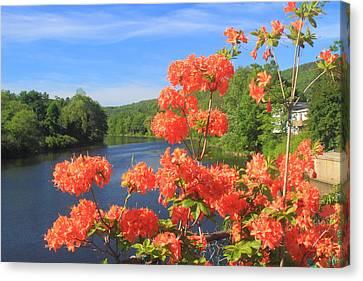 Shelburne Falls Bridge Of Flowers Azelea Canvas Print by John Burk