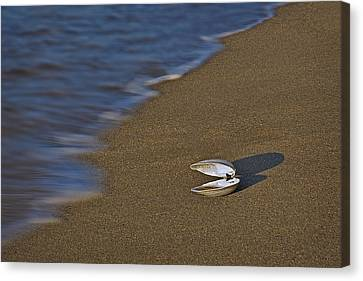 Shell By The Shore Canvas Print by Susan Candelario