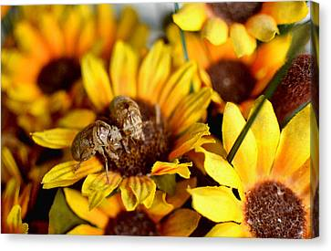 Shell Of A Bug On Flower Canvas Print by Jeffrey Platt