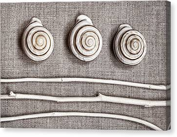 Shells And Sticks Canvas Print by Carol Leigh