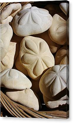 Shells By The Basket Full Canvas Print by Bruce Bley