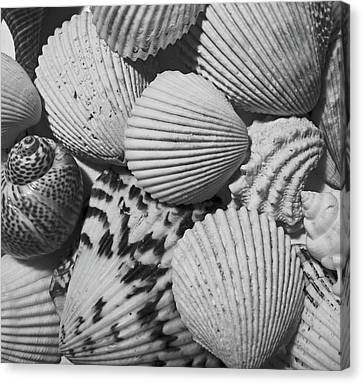 Shells In Black And White Canvas Print by Mary Bedy