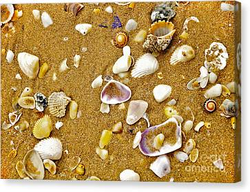 Shells In The Sand Canvas Print by Kaye Menner