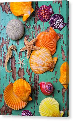 Shells On Old Green Board Canvas Print by Garry Gay