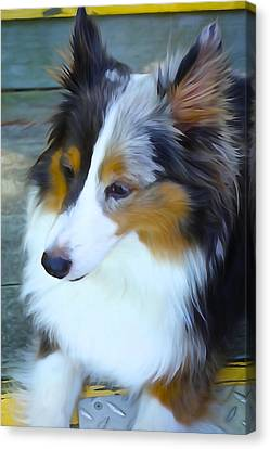 Sheltie In Watercolor Canvas Print by Charlie and Norma Brock