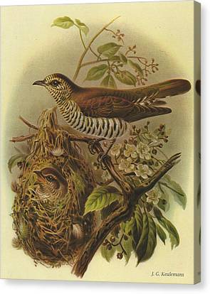 Shining Cuckoo Canvas Print by J G Keulemans