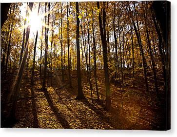 Shining Sun In The Woods Canvas Print by Kamil Swiatek