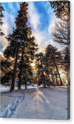 Shining Through Canvas Print by Mark Papke