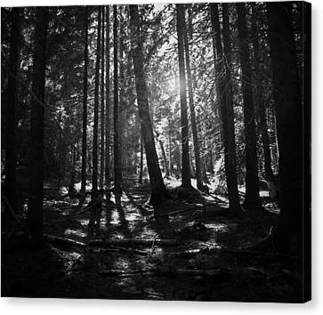 Shining Through Canvas Print by Nicklas Gustafsson