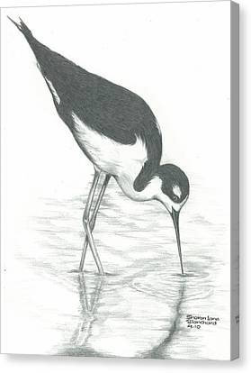 Shore Bird Canvas Print by Sharon Blanchard