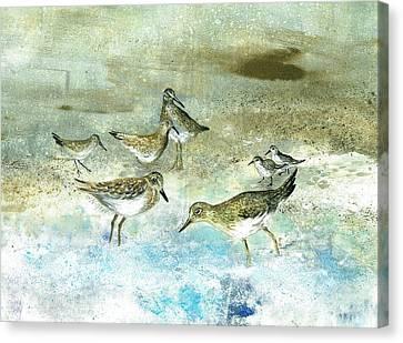 Shore Birds Canvas Print by Nancy Gorr