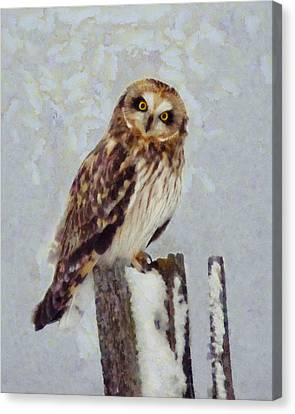 Short-eared Owl   Canvas Print by Mark Kiver