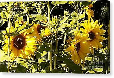 Shout Out Summer Canvas Print by Martin Howard