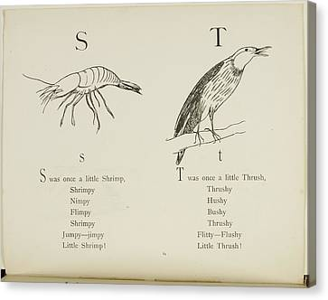 Shrimp And Thrush Canvas Print by British Library