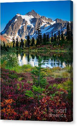 Shuksan Autumn Canvas Print by Inge Johnsson