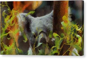 Shy Koala Canvas Print by Dan Sproul