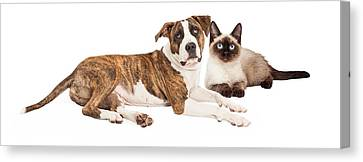 Siamese Cat And Mixed Breed Dog Canvas Print by Susan  Schmitz