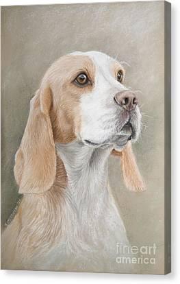 Beagle Portrait Canvas Print by Tobiasz Stefaniak