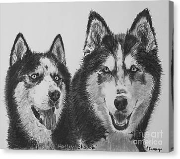 Siberian Husky Dogs Sketched In Charcoal Canvas Print by Kate Sumners