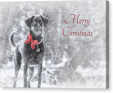 Sienna - Merry Christmas Canvas Print by Lori Deiter