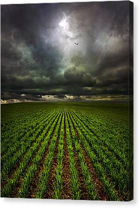Signs Of Life Canvas Print by Phil Koch