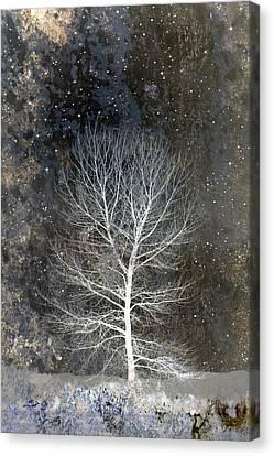 Silent Night Canvas Print by Carol Leigh