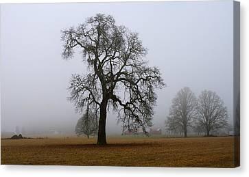 Silhouette In Fog Canvas Print by Harold Greer
